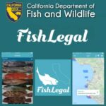 fish legal california